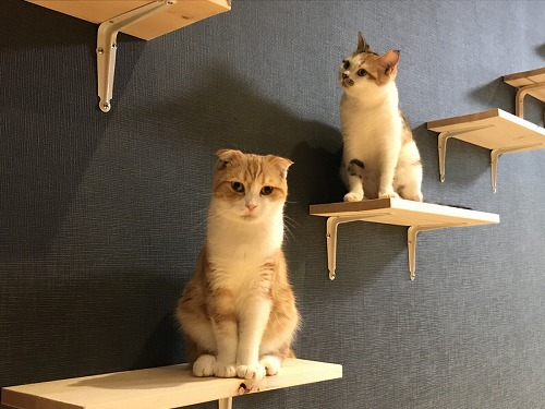 猫カフェ 猫喫茶 空陸家 パート2