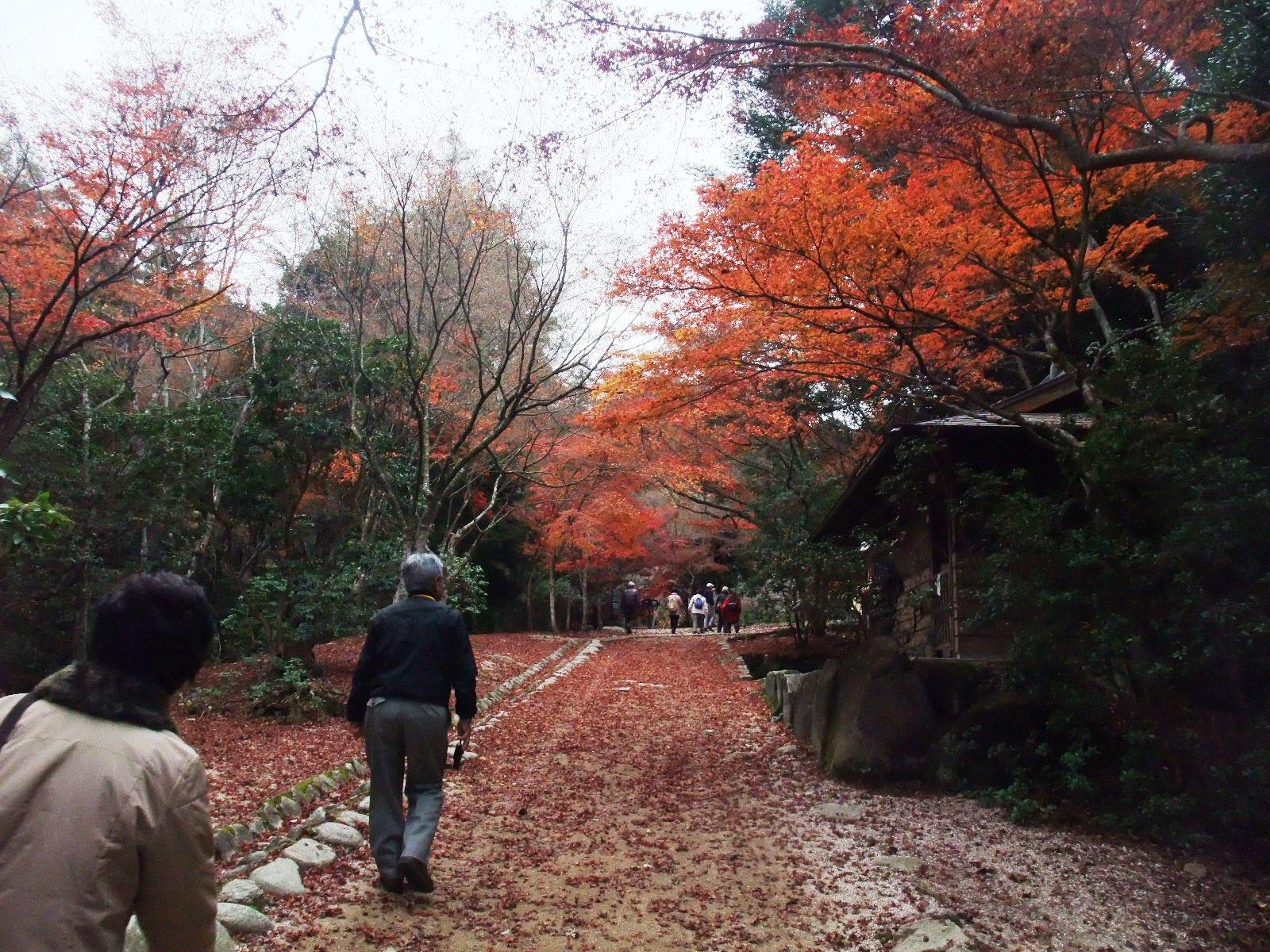 【広島】宮島秋の紅葉観光スポット
