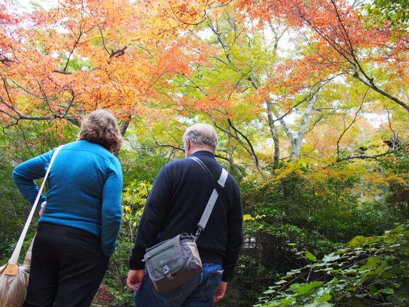 紅葉シーズンなら登るしかないでしょう!宮島の弥山!!