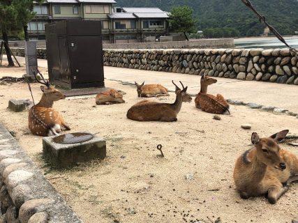 TOTO宮島おもてなしトイレ